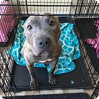 Adopt A Pet :: Nala - Villa Park, IL