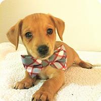 Adopt A Pet :: Leo-Bryanna Pup - Encino, CA