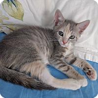 Adopt A Pet :: Bessie - Brooklyn, NY