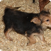 Adopt A Pet :: Thing two - Harmony, Glocester, RI