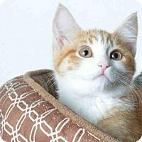 Adopt A Pet :: JILL - Ukiah, CA
