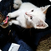 Adopt A Pet :: Bashful - Millerstown, PA