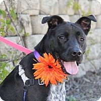 Adopt A Pet :: Lilly - Vista, CA