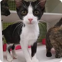 Adopt A Pet :: Mogwai - Louisville, KY