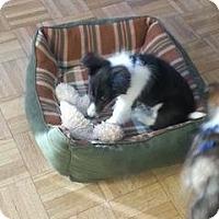 Adopt A Pet :: Quinn - Circle Pines, MN