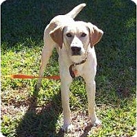 Adopt A Pet :: Marley - Altmonte Springs, FL