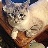 Adopt A Pet :: Angelo (DS) - Little Falls, NJ