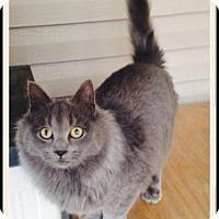 Adopt A Pet :: Oscar - Hazard, KY