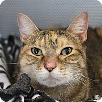 Adopt A Pet :: Sammy - Sarasota, FL