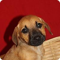 Adopt A Pet :: Wilma - Waldorf, MD