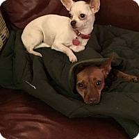 Adopt A Pet :: Lahna and Taylor - Chicago, IL