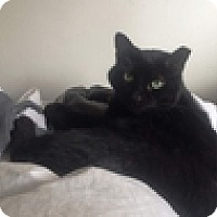 Adopt A Pet :: Frankinie - Vancouver, BC