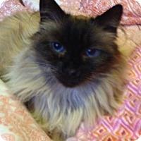 Adopt A Pet :: Jinxy - Beverly Hills, CA