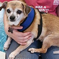 Adopt A Pet :: T-Rex - Phoenix, AZ