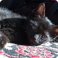 Adopt A Pet :: Bomba - Orange, CA