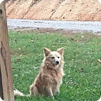 Adopt A Pet :: Daisey Sue - Hagerstown, MD