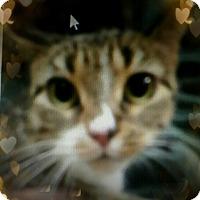 Adopt A Pet :: Chioma - Trevose, PA