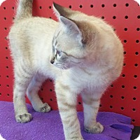 Adopt A Pet :: Sydney - Walnut Creek, CA