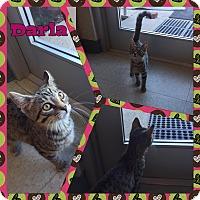Adopt A Pet :: Darla - Bryan, OH