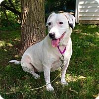 Adopt A Pet :: Vanna - Doylestown, PA