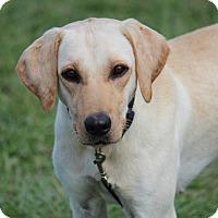 Adopt A Pet :: Ember - Jay, NY