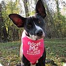 Adopt A Pet :: Isra