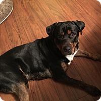 Adopt A Pet :: Nessa - Keswick, ON