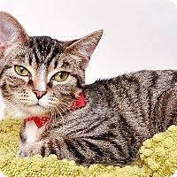 Adopt A Pet :: ENZO - Wyandotte, MI