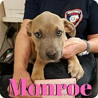 Adopt A Pet :: Monroe - College Station, TX