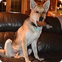 Adopt A Pet :: Rupert - Hamilton, MT