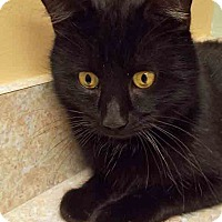 Adopt A Pet :: Little Bit - Hinsdale, IL