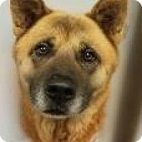 Adopt A Pet :: Jeramie 6486 - Columbus, GA