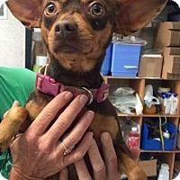 Adopt A Pet :: Sasha - Freeport, FL