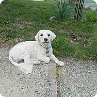 Adopt A Pet :: Flower - West Deptford, NJ