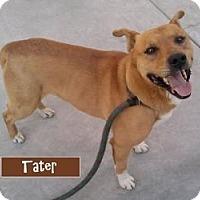 Adopt A Pet :: Tater - Canoga Park, CA