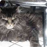 Adopt A Pet :: Smokie - Davis, CA
