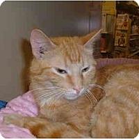 Adopt A Pet :: JORDYN - No.Charleston, SC
