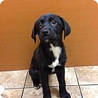 Adopt A Pet :: Fancy - Lancaster, OH
