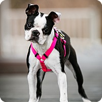Adopt A Pet :: Olive - ADOPTION PENDING - Greensboro, NC