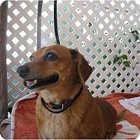 Adopt A Pet :: NGO - Tucson, AZ