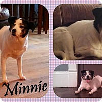 Adopt A Pet :: Minnie - DOVER, OH