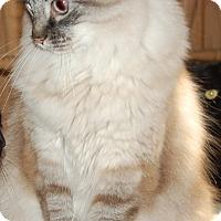 Adopt A Pet :: Max - Bentonville, AR