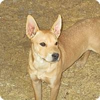 Adopt A Pet :: Butter - Perris, CA