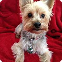 Adopt A Pet :: Chester/pending - Elkhart, IN