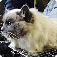 Adopt A Pet :: Angus - Broomall, PA