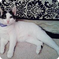 Adopt A Pet :: Alice (Clem) - Colmar, PA