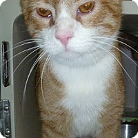 Adopt A Pet :: Trenton - Hamburg, NY