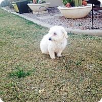 Adopt A Pet :: Cash - Maricopa, AZ