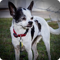 Adopt A Pet :: Lucy - Weeki Wachee, FL