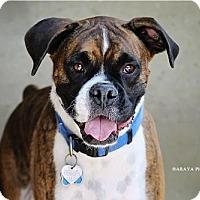 Adopt A Pet :: Rosco (16) - Phoenix, AZ